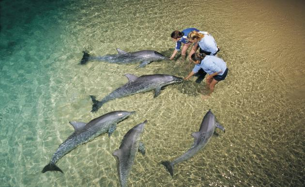 Sunrover Expeditions: 2 day/1 night Tangalooma Dolphin Feeding - 4WD, Sandboarding and snorkelling Tour
