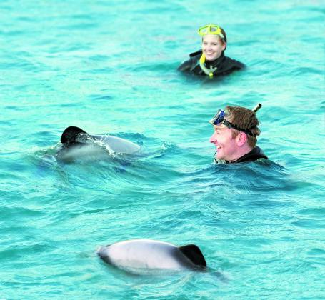 3hr Swimming with Dolphins