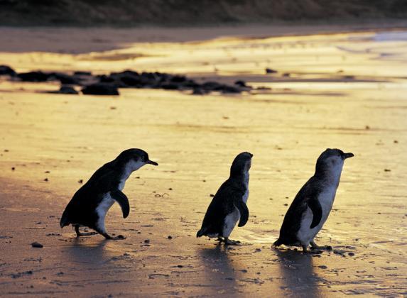 2 Day/1 Night Great Ocean Road & Phillip Island Adventure Tour