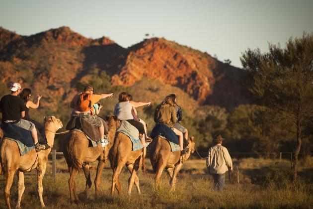 12noon one hour camel ride - Pyndan Camel Tracks Alice Springs
