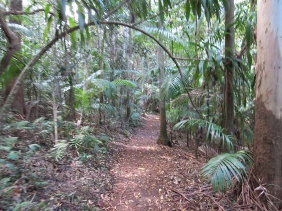 Queensland Day Tours: Springbrook and Tamborine Rainforest Tour - Natural Bridge and Glow Worms
