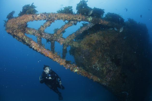 Rainbow Warrior Wreck and Reef Dive