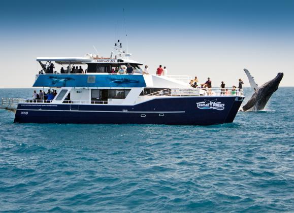 Tasman Venture: Afternoon Half Day Whale Watching Tour