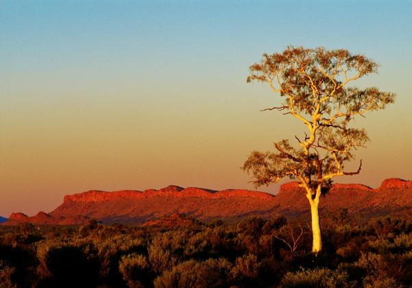 1 Day West MacDonnell Ranges Tour - Emu Run Experience