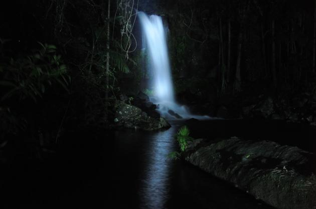 Evening Rainforest, Waterfall and Glow Worm Tamborine Tour - Tour GW