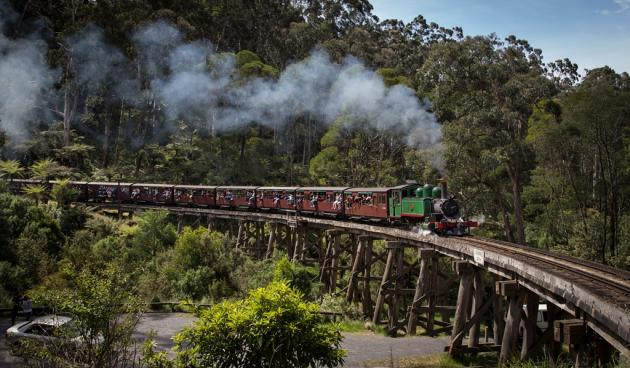 1 Day Healesville Sanctuary, Dandenong Ranges & Puffing Billy Tour