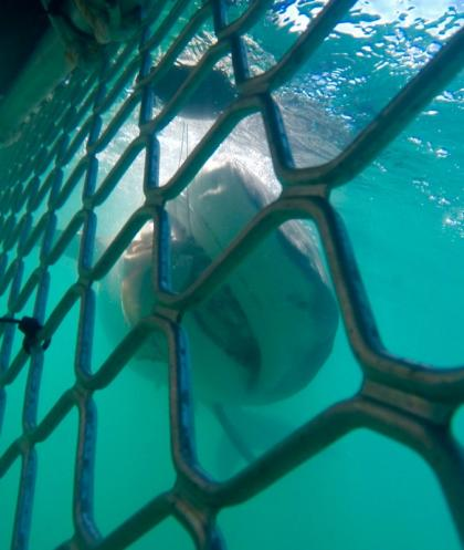 Darwin Red Devil Charters: Shark Cage Diving