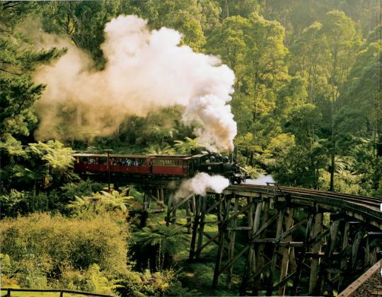 Half Day Puffing Billy & Dandenong Forest Tour