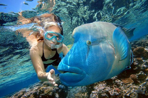 Sunlover Outer Reef & Kuranda