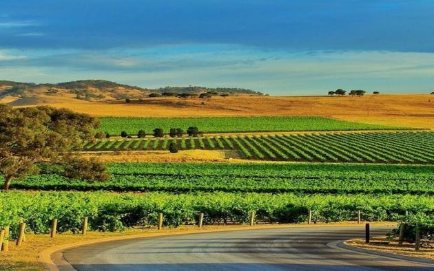 Barossa Valley Food & Wine Tours & Maggie Beer's Pheasant Farm
