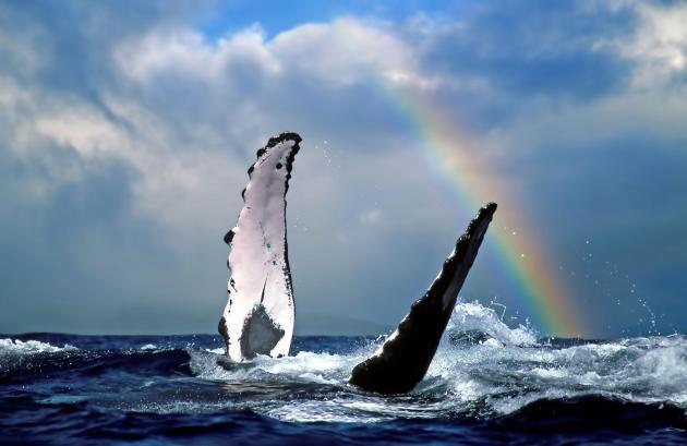 Wild Byron: Whale Watching Sea Safari