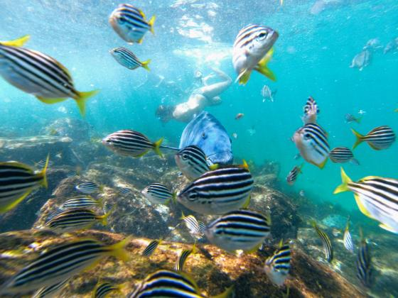 ECOTREASURES: Manly Snorkel Walk and Talk Tour