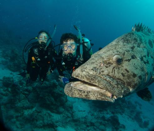 Cod Hole & Ribbon Reefs Dive Adventure