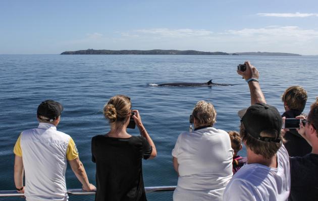 Auckland Whale & Dolphin Safari:  Eco-tour in Hauraki Gulf Marine Park
