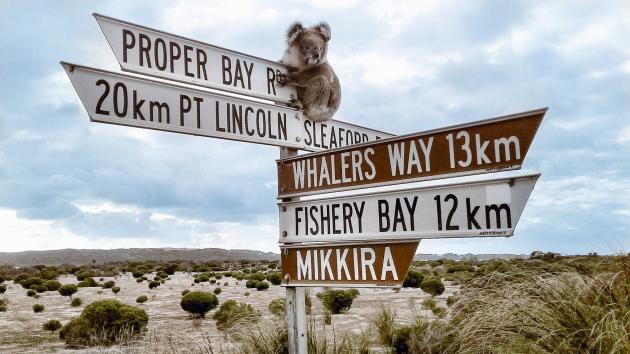 Port Lincoln & Coffin Bay Tour