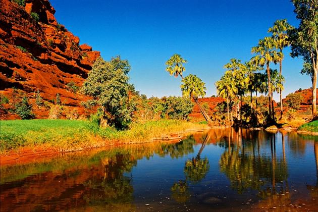 1 Day Palm Valley 4WD Tour