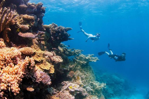 Full Day Snorkel Tour to the Great Barrier Reef Snorkel Tou