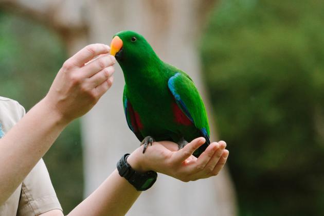 Puffing Billy & Healesville Sanctuary Wildlife Park