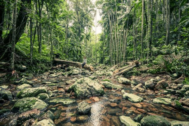 Wild Byron: Minyon Falls Rainforest walk