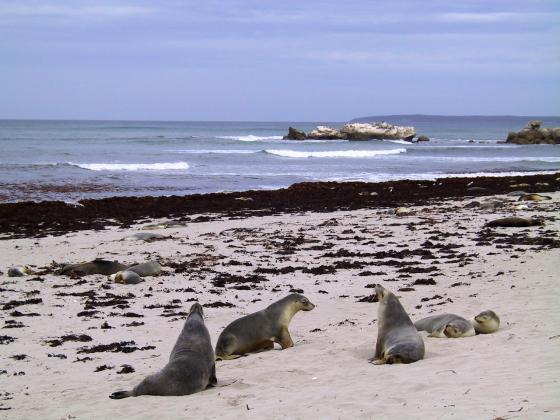 1 day Kangaroo Island Tour