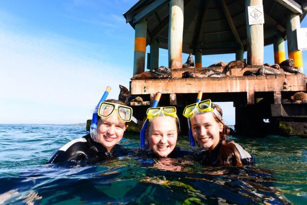 2hr Dolphin Cruise, Seal Swim and Reef Snorkel Adventure