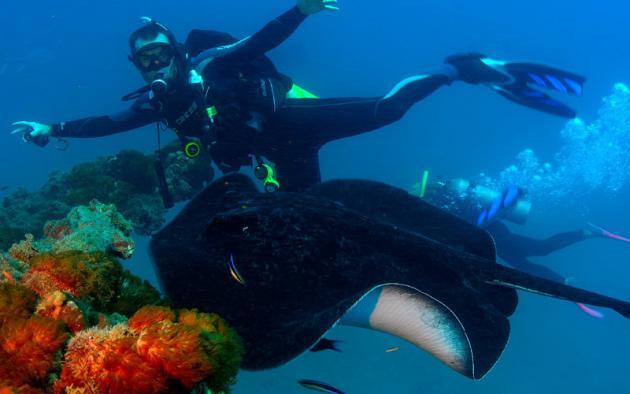 Adrenalin Dive: SS Yongala Day Trip - Diving Only