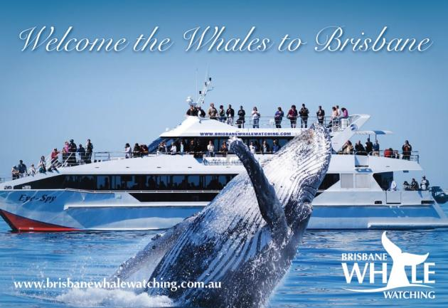 Brisbane Whale Watching Tours