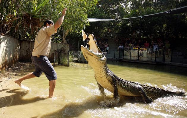 1/2 Day Hartleys Croc Adventure