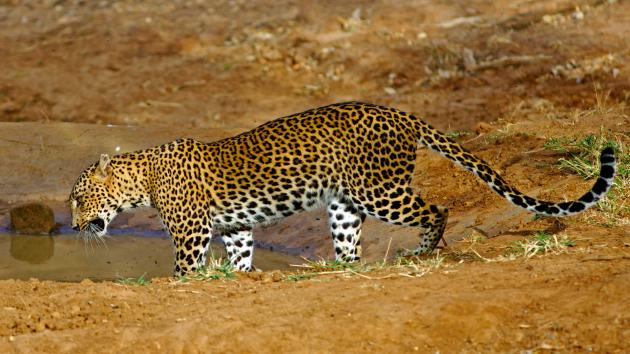 Private Day Tour to Wilpattu National Park