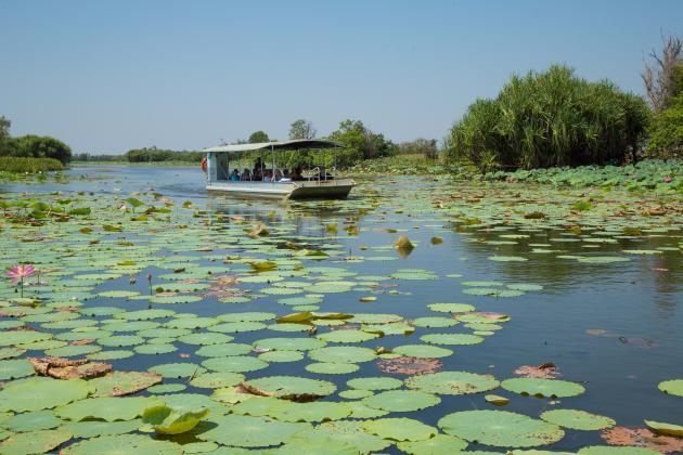 Corroboree Billabong Wetland Cruises -1.5 Hour Morning Cruise
