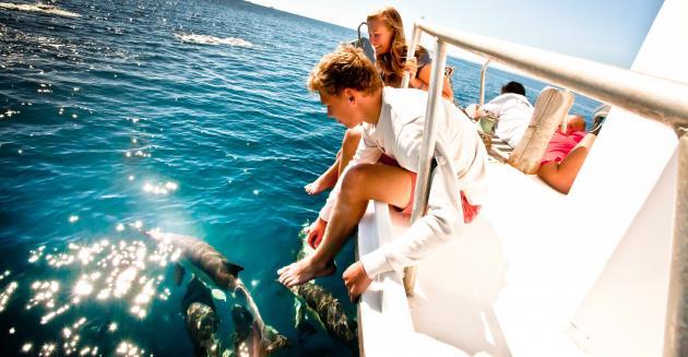 Island & Wildlife Cruise