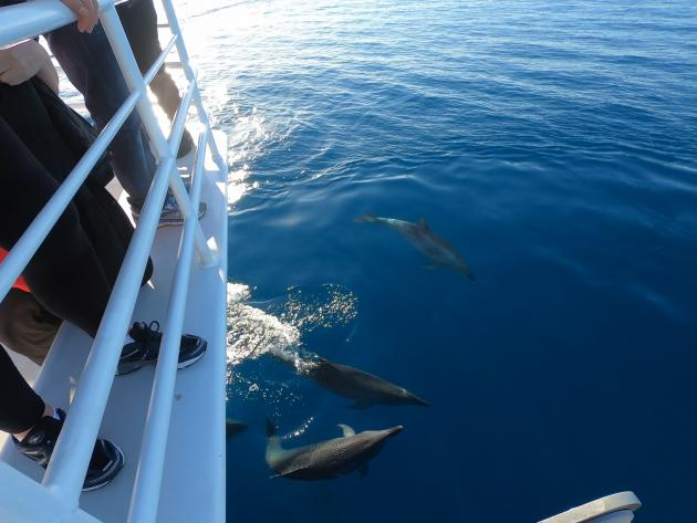 Whale Search/Dolphin Watch Cruise