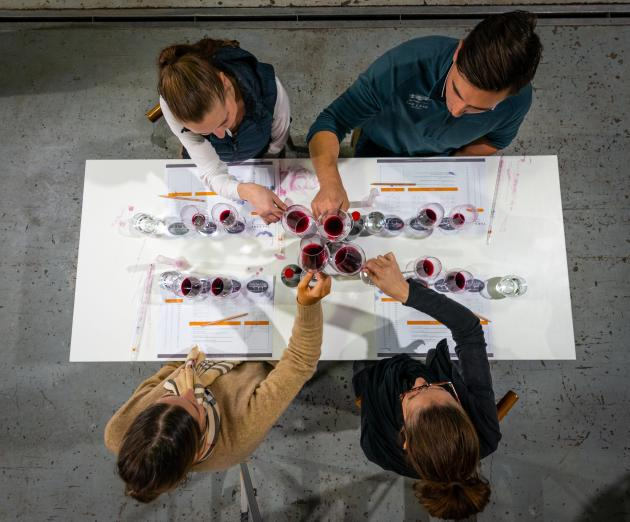 Winemakers Experience